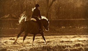 horse riding 300x175 - 3 Main Reasons Why Horse Riding is a Great Means of Recreation