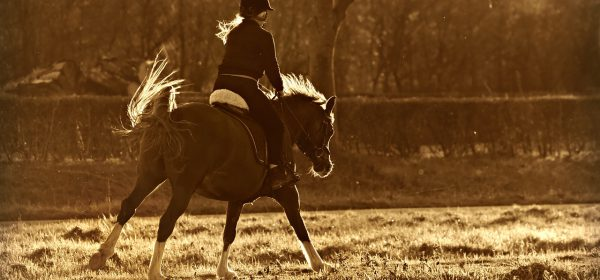 horse riding 600x280 - 3 Main Reasons Why Horse Riding is a Great Means of Recreation